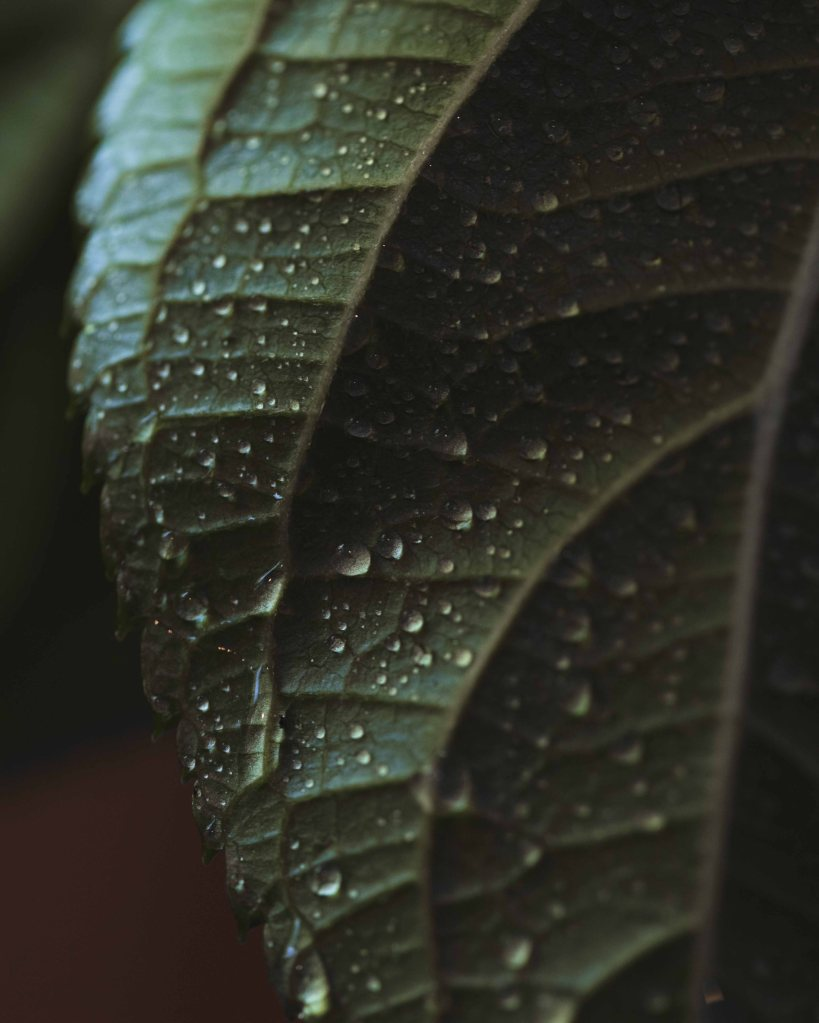 Macro photo of a green leaf with water drops