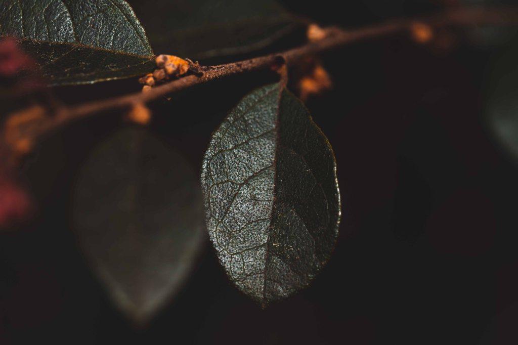 Macro shot of a green leaf