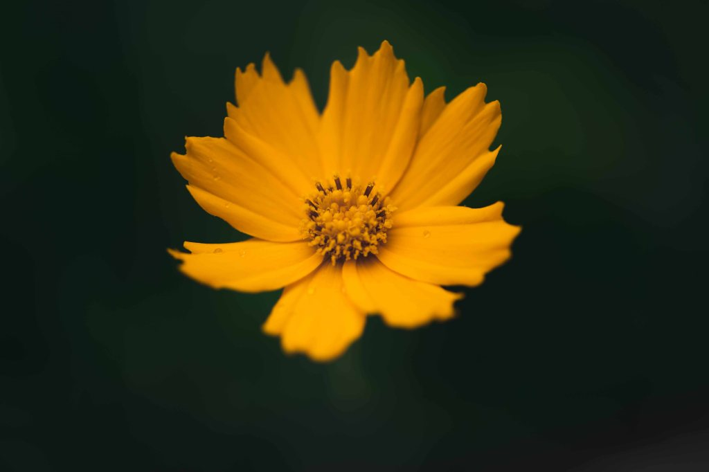 Macro photo of a yellow flower