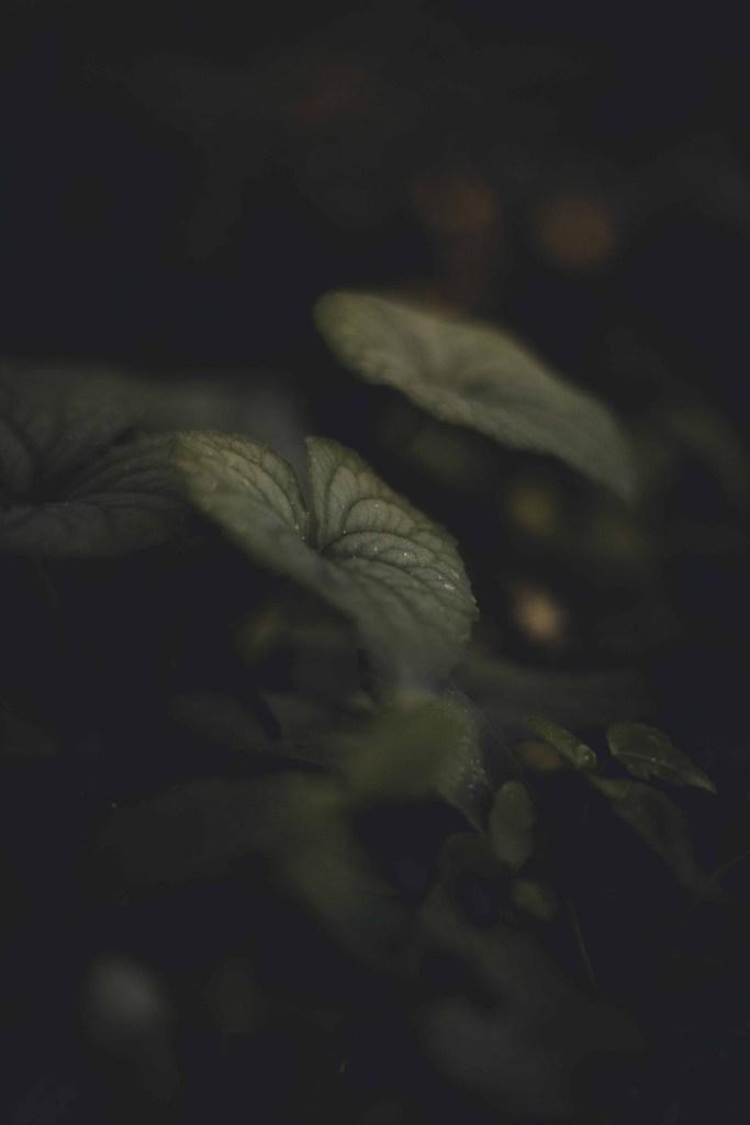 Leaf in nature